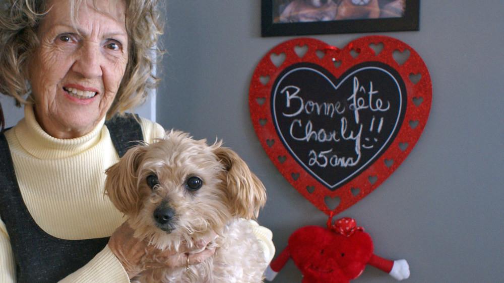 Association des médecins vétérinaires du Québec en pratique des petits animaux